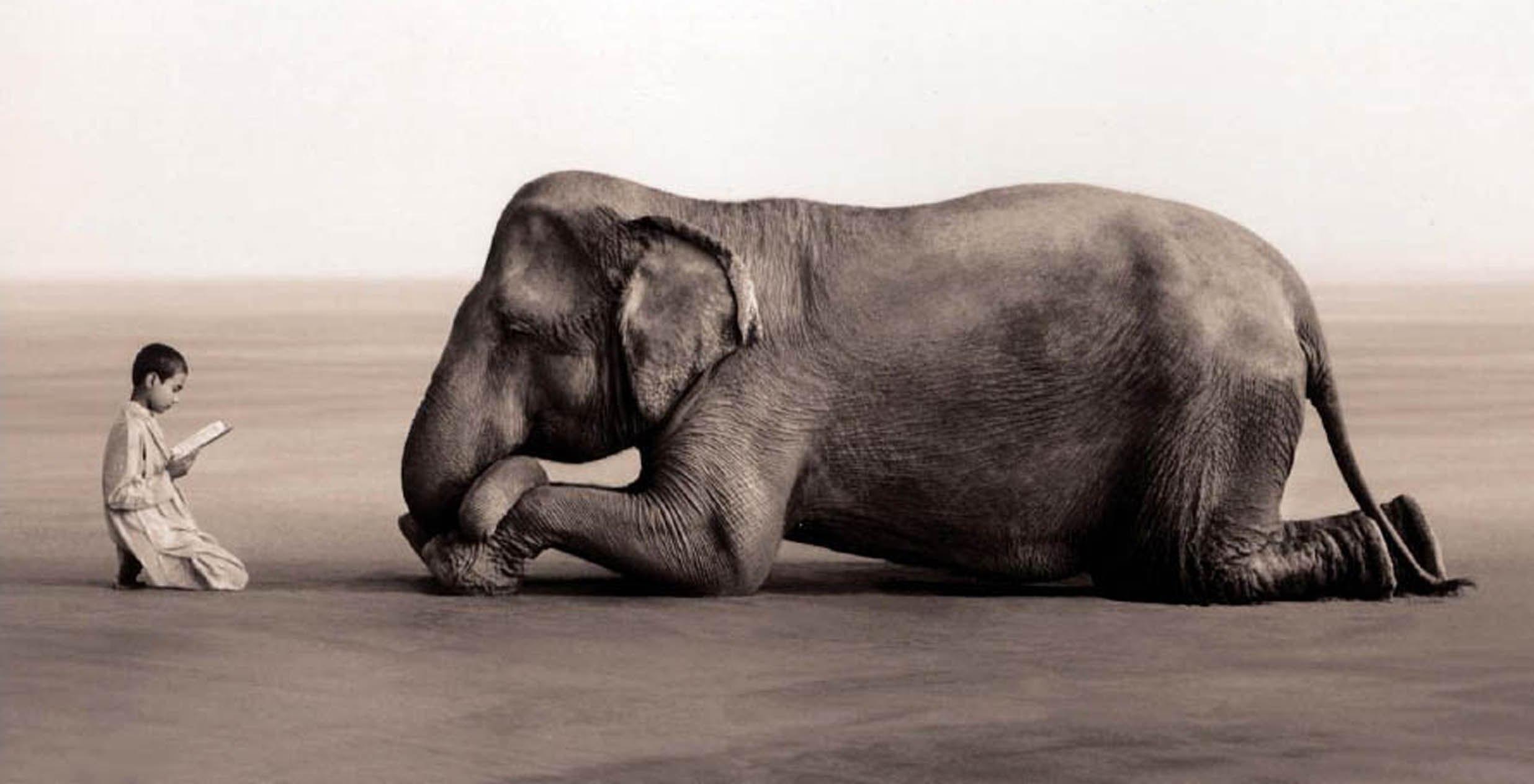 Животные и люди. Что между нами общего?