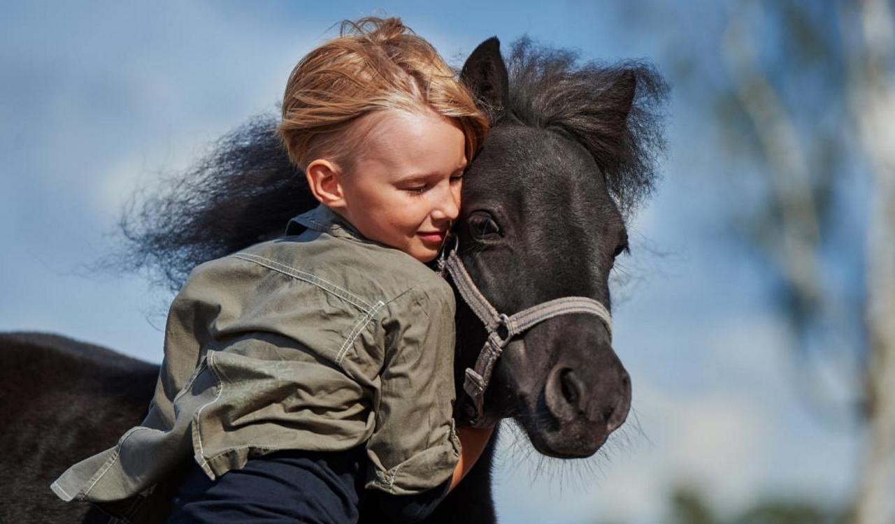 Как животные помогают людям: четвероногие помощники
