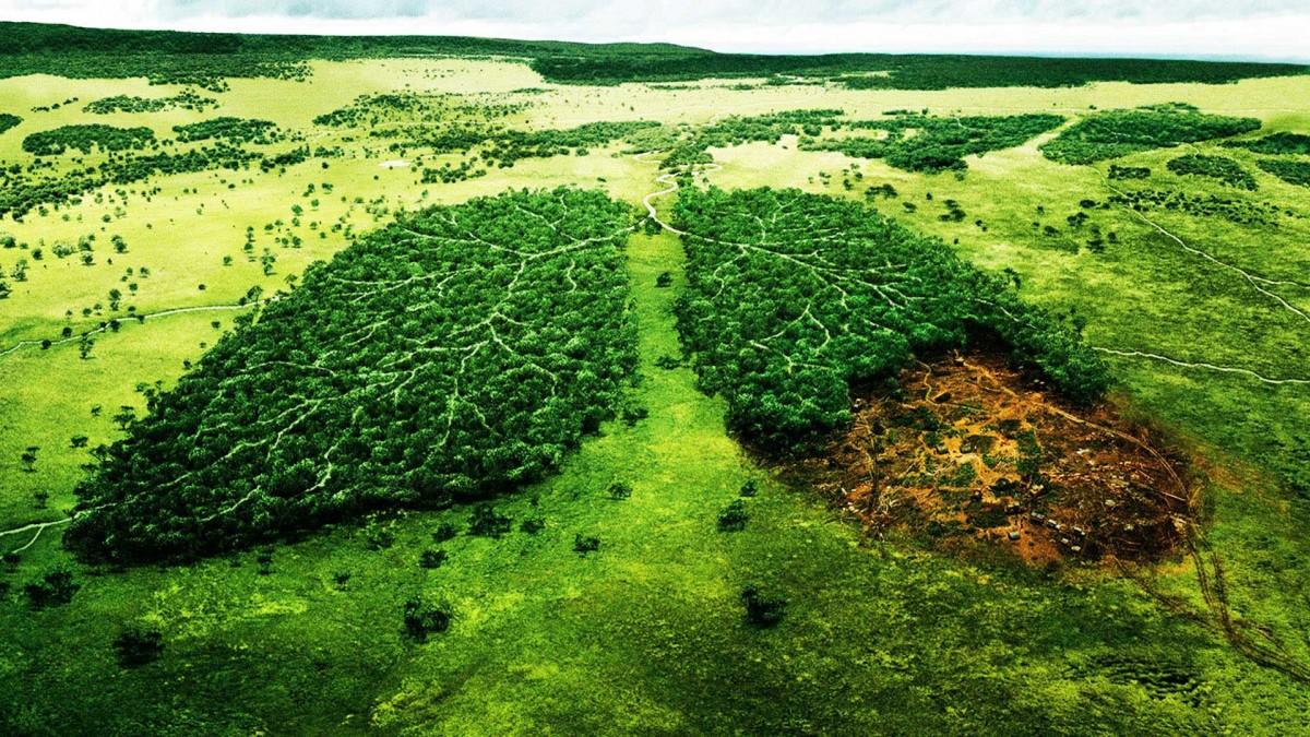 Как сохранить лес