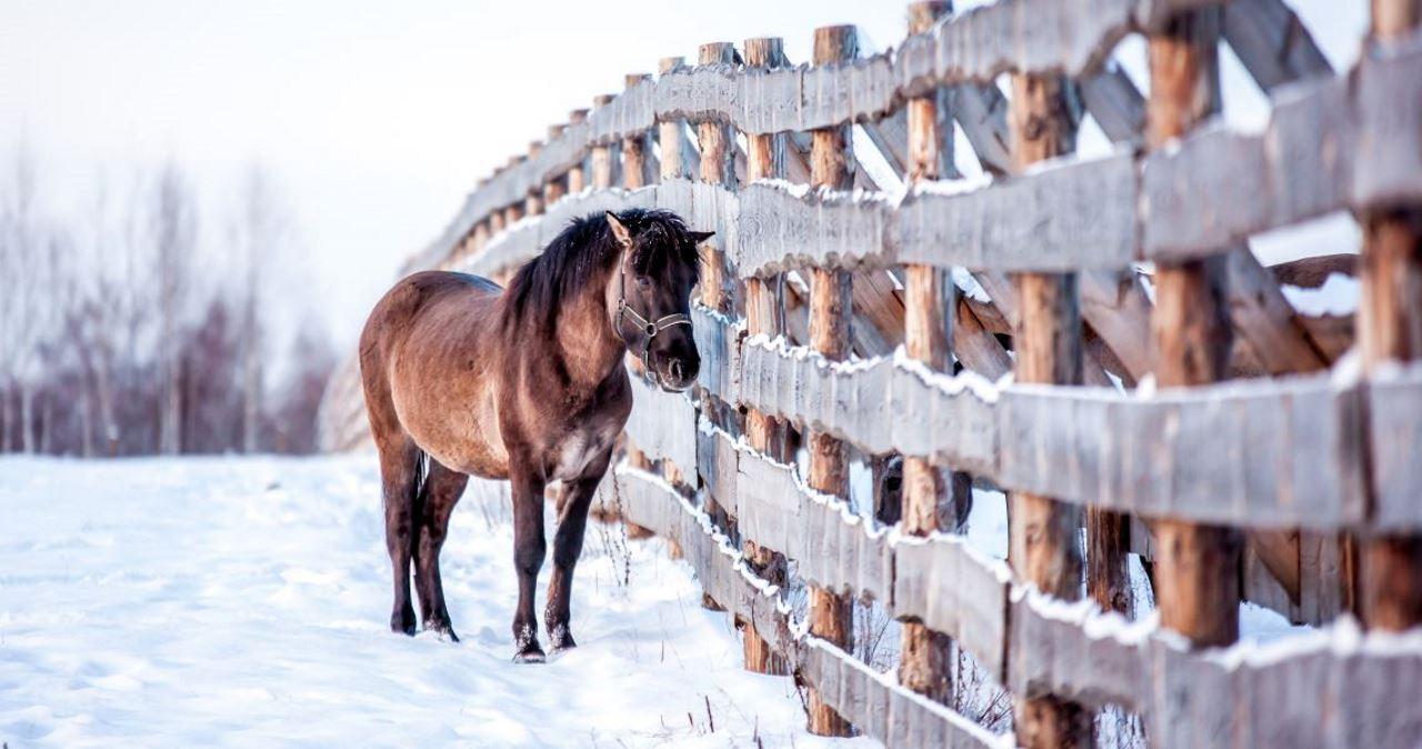 Как ухаживать за гривой лошади?