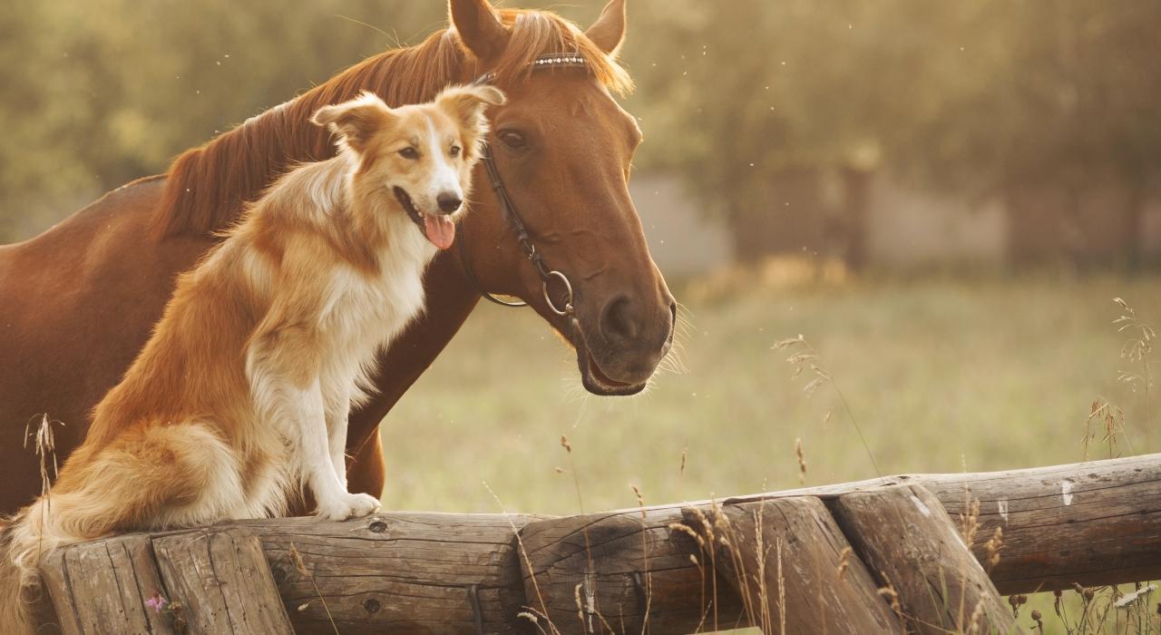 Как использовать домашних животных