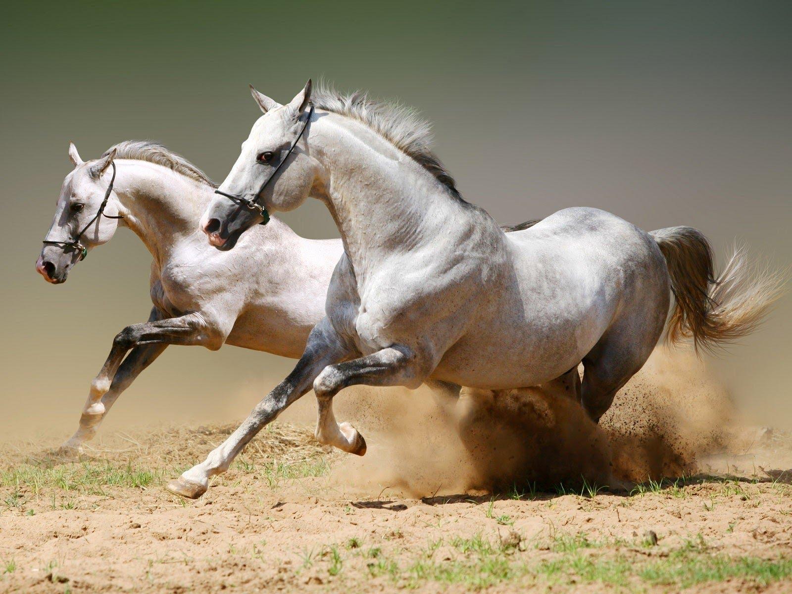 Видео месяца. Лошади во всей своей красе