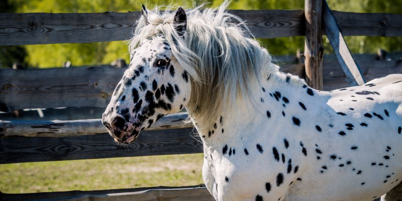Как кличка влияет на характер лошади?
