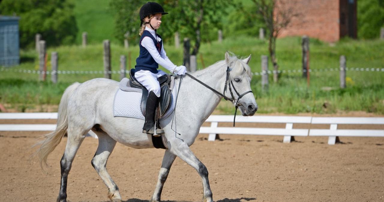 Верховая езда: как научиться ездить на лошади?