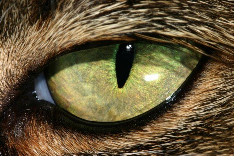 Как видят дикие животные