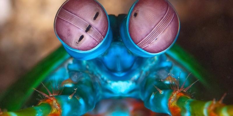 У каких животных цветное зрение?