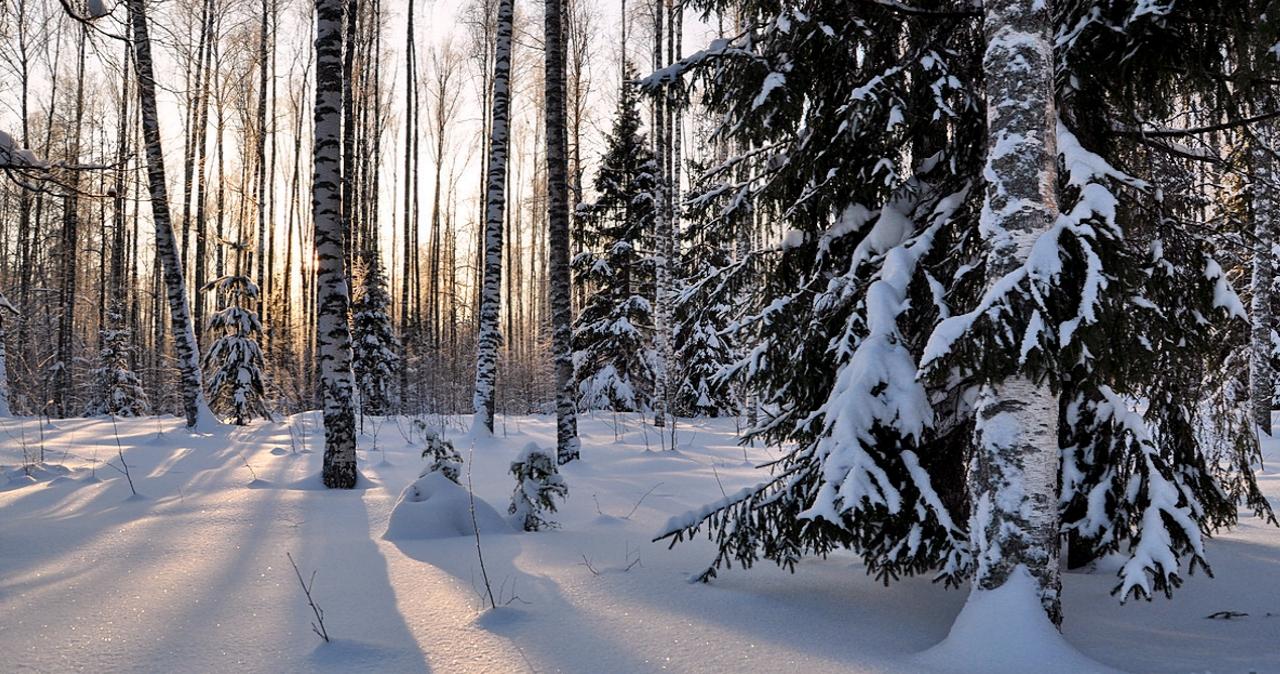 Снег и лес: влияние снежного покрова на рост растений