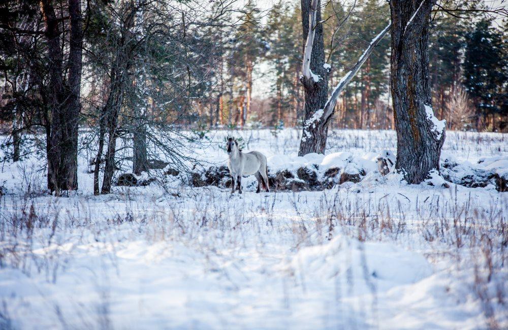 Как фотографировать природу зимой
