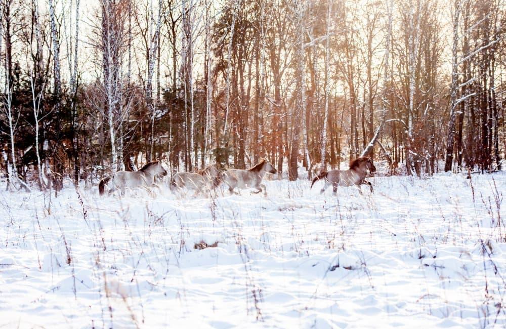 Картинки по запросу Беремицкое парк зимой
