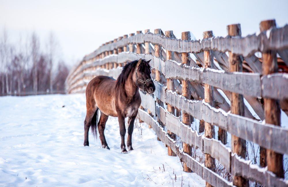 Как ухаживать за лошадьми зимой