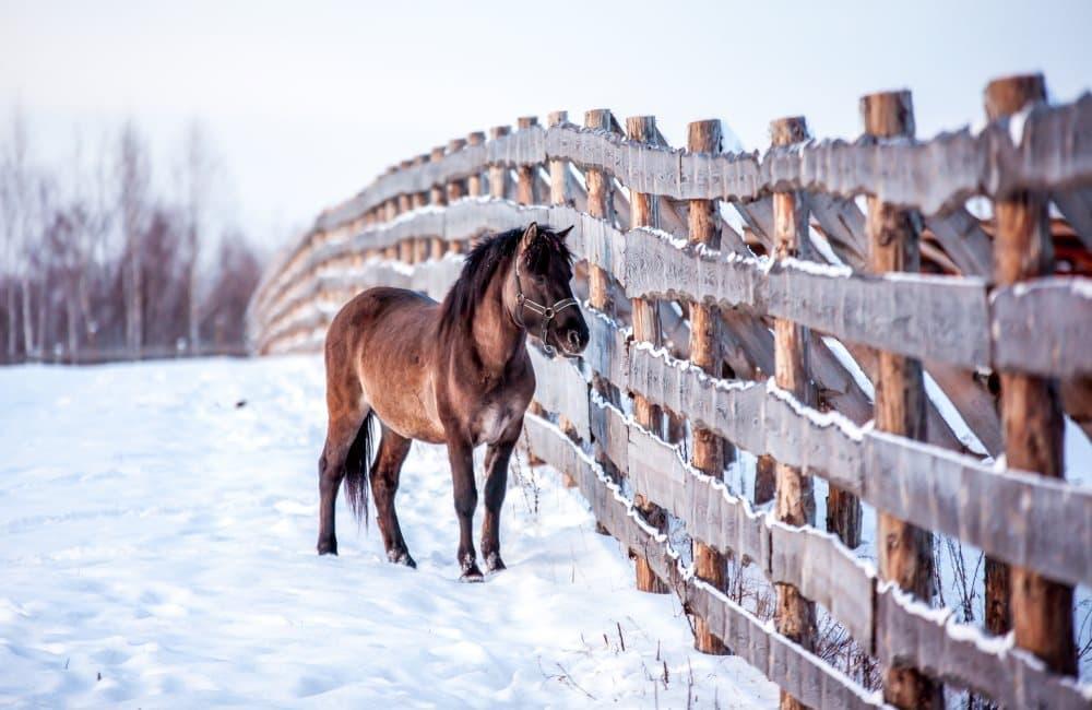 Уход за лошадьми и катание на лошадях