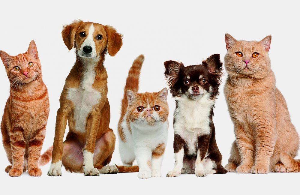 С Днем домашних животных