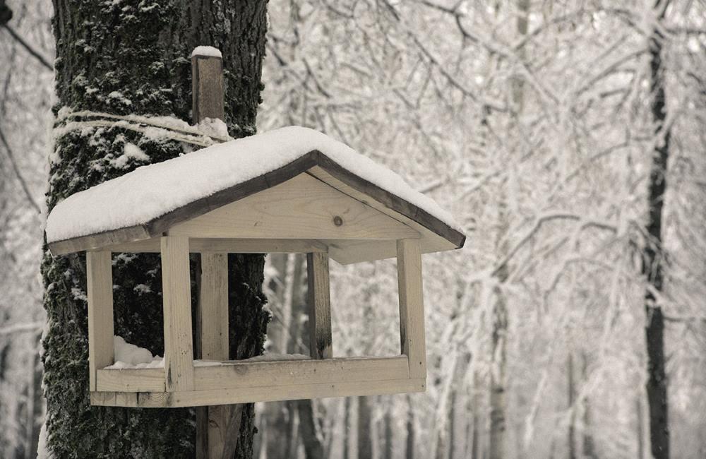 Как заботиться о птицах зимой