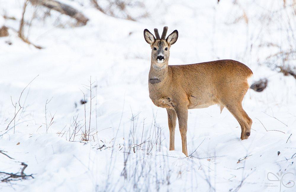 Чем подкармливать диких животных зимой?