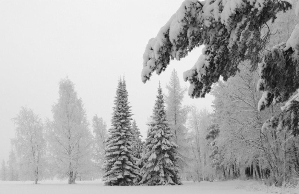 Как зимуют деревья: интересные факты о деревьях в природе