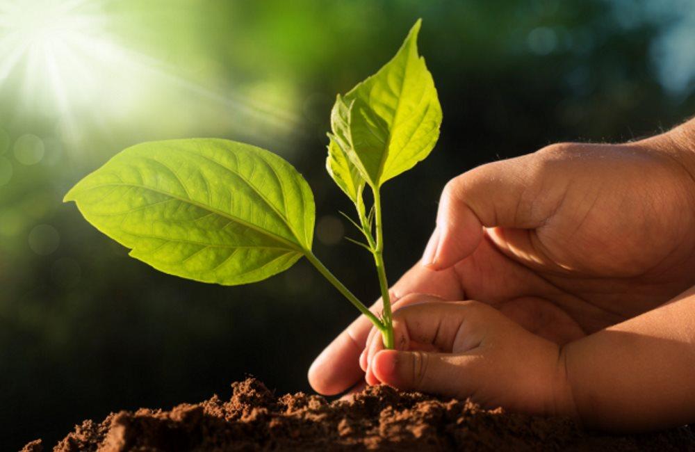 Как сохранить природу? Простые бытовые правила от Парка природы «Беремицкое»