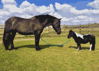 Фалабелла – найменші коні в світі