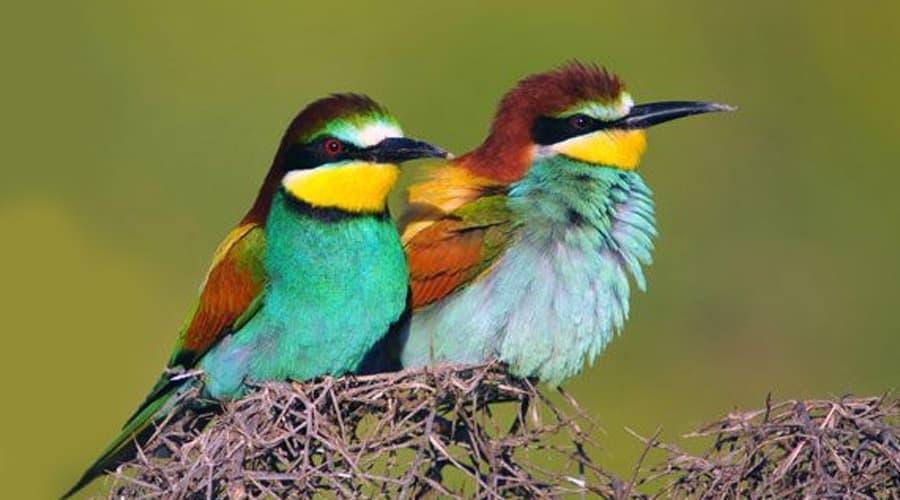 Топ 5 самых ярких птиц орнитофауны Украины