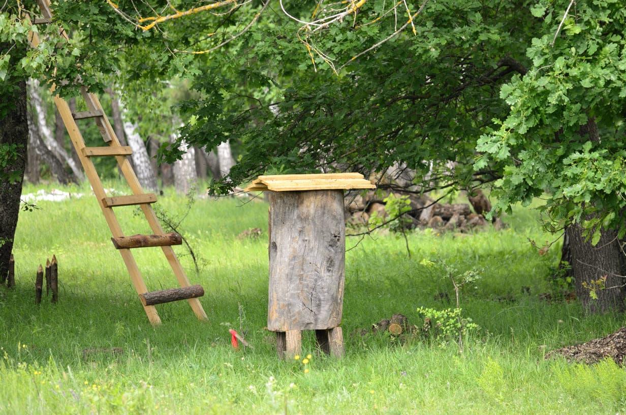 С Днем пчеловода!