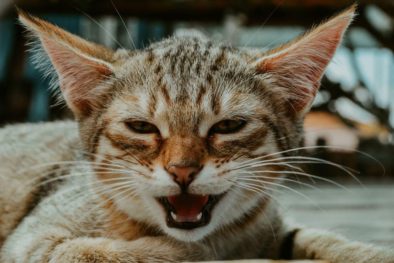 С Всемирным днем котов