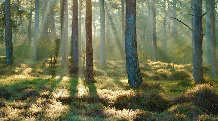З Днем працівників лісу!
